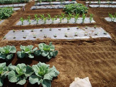 宮崎市内で週末農業(貸し農園・市民農園)やりませんか?
