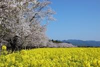 ゆっ旅宮崎「春の西都原古墳群とガーデニング体験ツアー」募集中