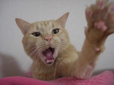 おいしそうな脚の女子校生 236脚目猫ガイジ隔離スレ [無断転載禁止]©bbspink.comYouTube動画>1本 ->画像>3716枚