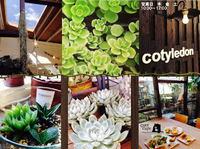 多肉植物屋cotyledon(宮崎市)