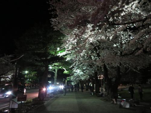 桜と女体は明るいところで見るに限る(迫真)