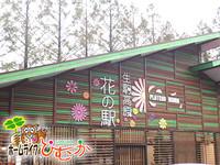 生駒高原にコスモスを見に行きました