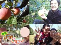 生駒高原のリンゴでコンポートを作りました。