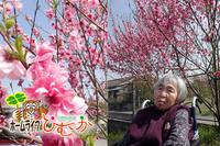もちろん、ホームライフひむかにも桜の木があるんですよ