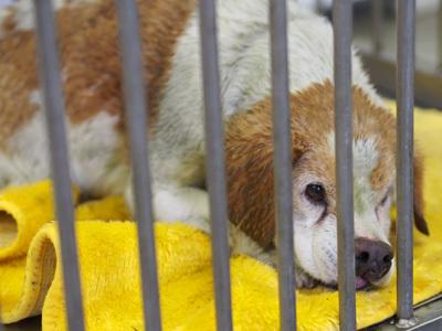 「フィットネスイベントに参加して、動物愛護団体へ支援しよう!