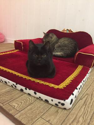 ハンデのある保護猫カフェ「イチゴroom」