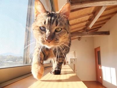 保護猫カフェのシステム