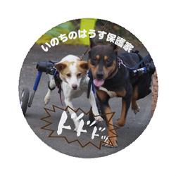 1/31☆「ドッグフェスタ in 都農」に参加させていただきます♪
