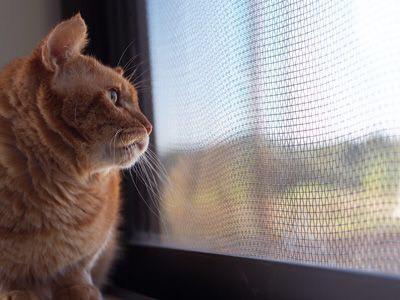 猫のホスピス