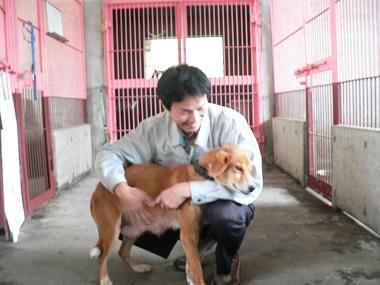 「ひまわりと子犬の7日間」放送