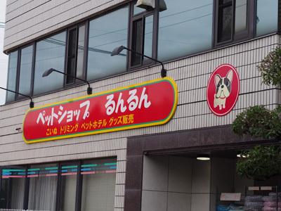 4日譲渡会お知らせ