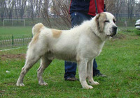 アラバイ犬とは