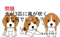 犬犬♪ 犬風♪  犬犬犬風(^^♪