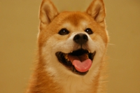 お尻がかわいい犬ランキング