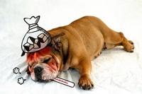 犬インフルエンザ