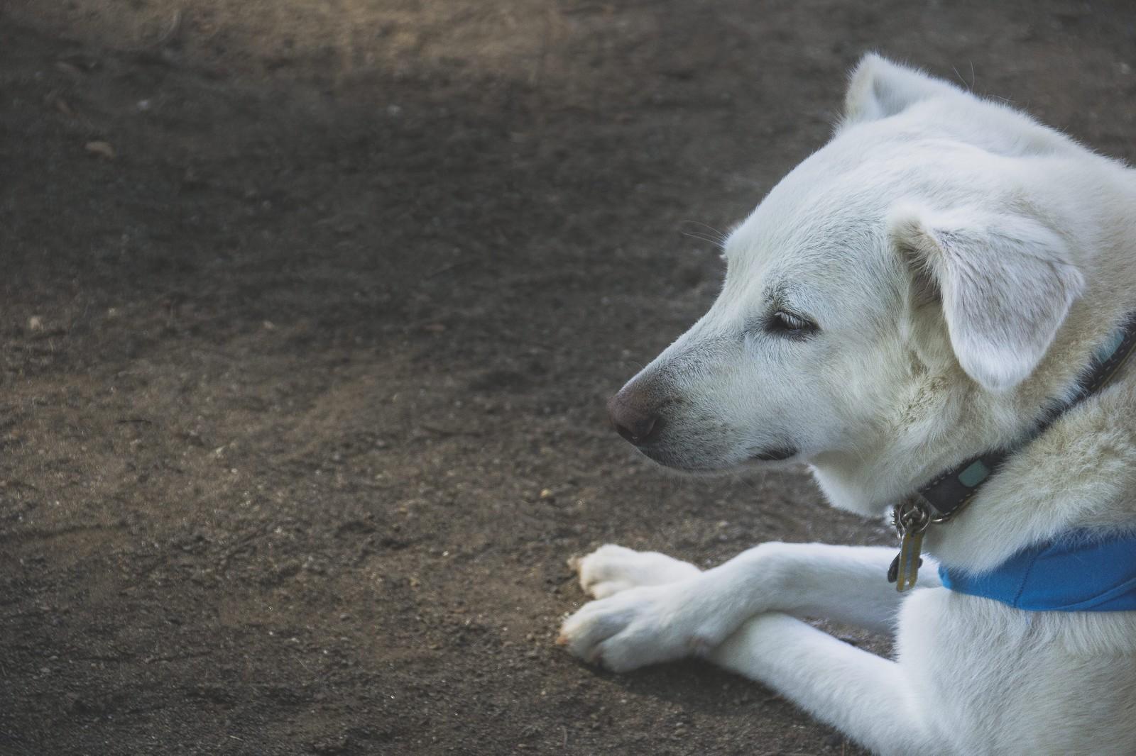 Pawstamp「迷い犬、猫の掲載依頼、受付開始」