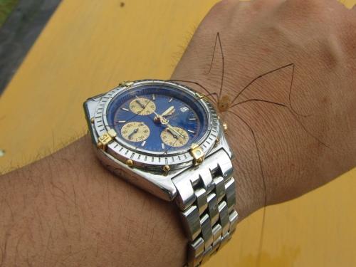 時計ぶっ壊れちゃった