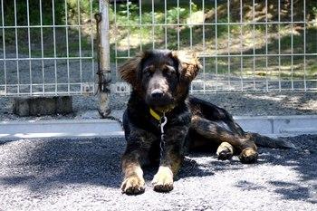 5/1現在の犬たちの紹介と、みたま園譲渡会の案内です