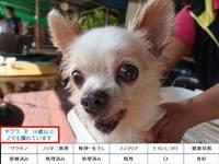 「第2回 ひまわりの家 in みたま園 犬猫譲渡会」結果報告
