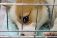 <犬猫譲渡会結報告 犬編>