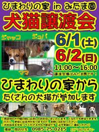 譲渡会のお知らせと5/22現在の犬たちの紹介