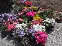 ♪ お花がいっぱい!!♪