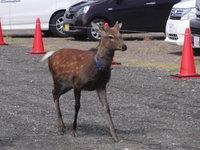 ♪ えっ??鹿!!