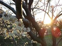 ココロぽかぽか(*´▽`*)春に出逢いに