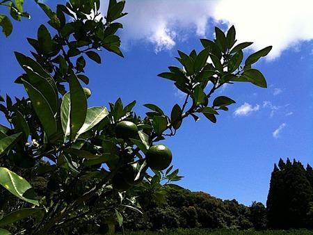 柑橘の達人「緑の里りょうくん」