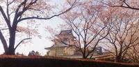 桜♪part2