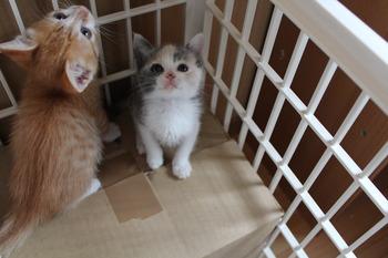 子猫保育園と参加選手