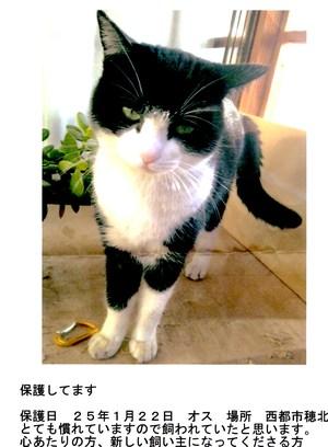 西都市穂北で迷い猫です。