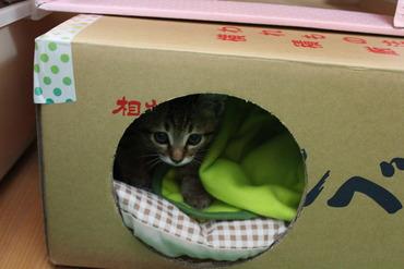猫レーダーキャッチ