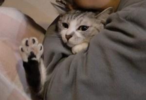 抱っこは嫌い