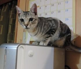 猫の胃カメラ