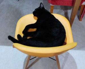 巨大黒猫おーじろう