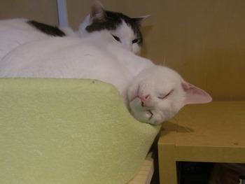 うさおくんはよく眠る