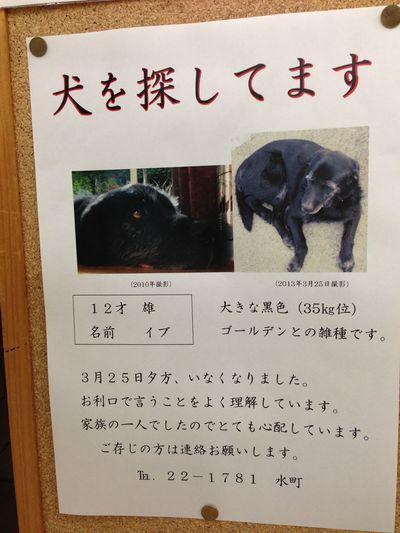 高鍋町・迷子犬を捜しています。