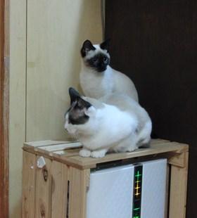いえ猫化プロジェクト⑤