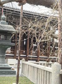 神戸・京都