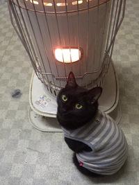 寒いですけど。。。