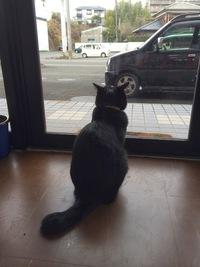 私の行くところ、猫だらけ