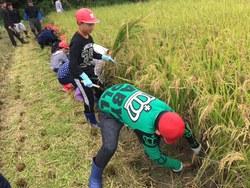稲刈での食育授業