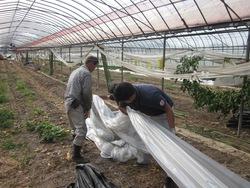 農家支援作業の実施