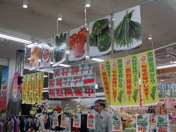 きゅうり試食宣伝活動 IN 名古屋