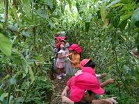 園児の収穫体験実施