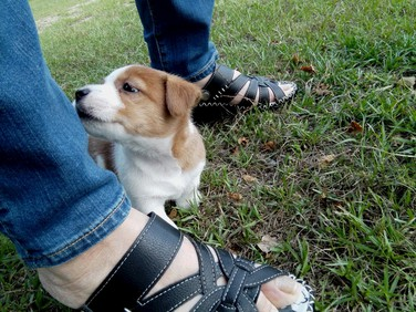 看板犬ジンの生後2か月
