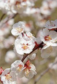 春分を境に、《リニューアル!!》のサイン・・・
