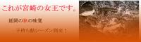 これが宮崎の女王です。 2013/10/01 20:13:06