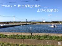 ナニコレ? 佐土原町で見た えびの尻尾切り 2013/10/17 09:53:51